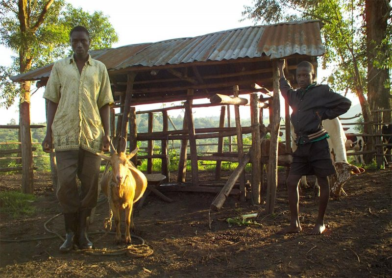 Banet, Honey the goat and Daudi at Ndali cattle shed