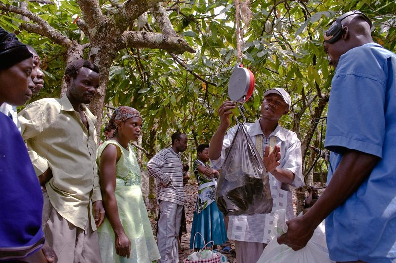 Weighing it right: vanilla scales in the cocoa plantation